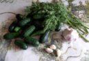 Малосольные огурцы с чесноком и зеленью. Как быстро посолить огурцы в пакете?