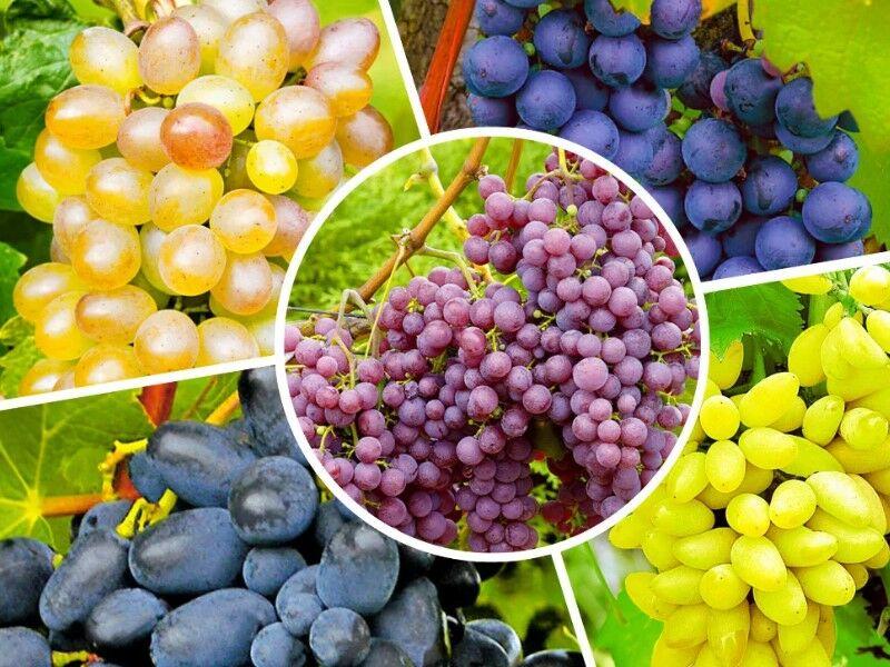 Вино из вареного винограда