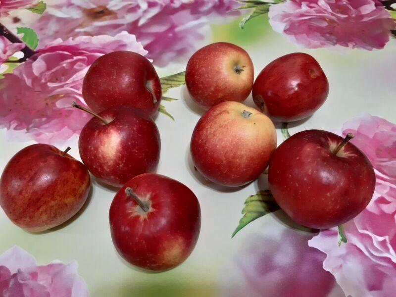 Яблоки на начинку